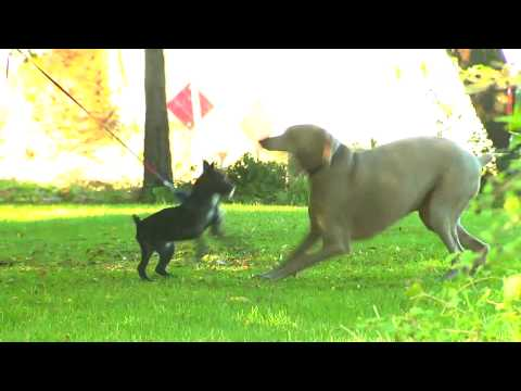 Preventing Ticks on your Dog or Cat
