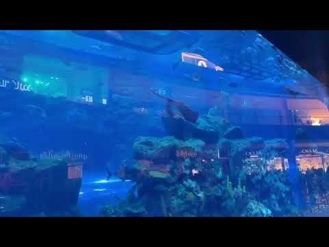Dubai Aquarium Youtube