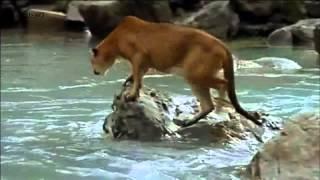Медвежонок против пумы.avi(, 2012-07-27T04:30:12.000Z)