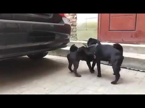 оргий с собачками