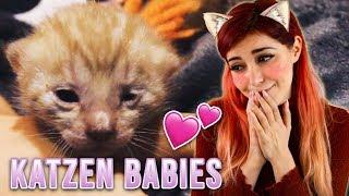 Ich werde Katzen Mama (Ja von dem Video kann man einen Zuckerschock kriegen)