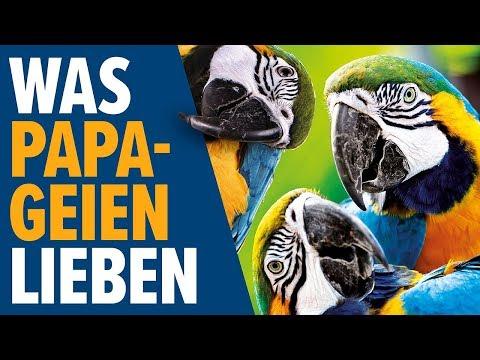 Was PAPAGEIEN Lieben | NORBERT ZAJAC | Zoo Zajac, Duisburg