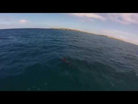 Post Four - V1 (Leeward Islands)
