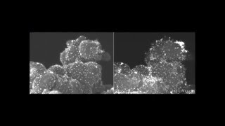 300 kv in situ sem stem observation of pt c catalysts using a hitachi hf 3300 microscope