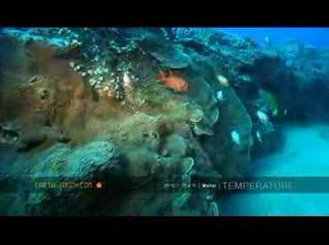 Offshore reef attracts different fish