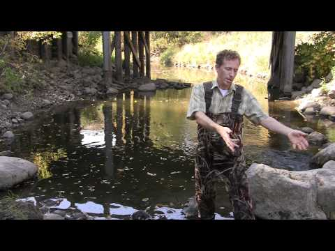 Ask an Expert- Macroinvertebrates- Ideal Conditions