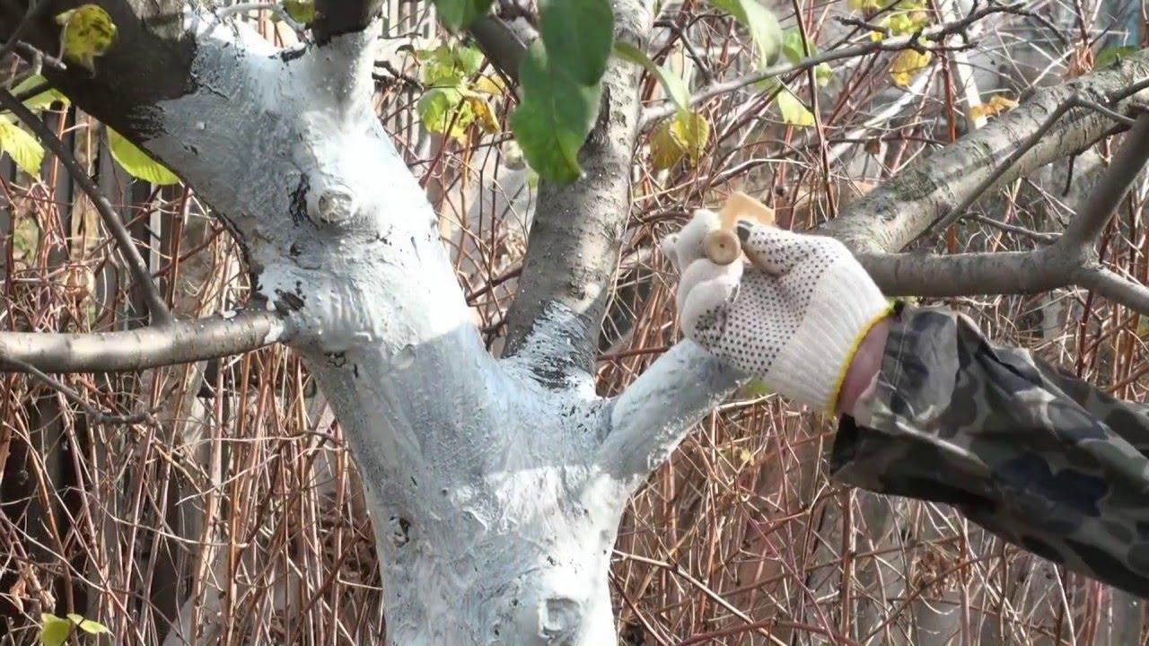 Побелка деревьев осенью известью: состав