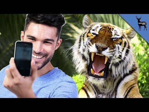 Tinder Tiger Selfies Banned from YouTube · Duration:  1 minutes 6 seconds