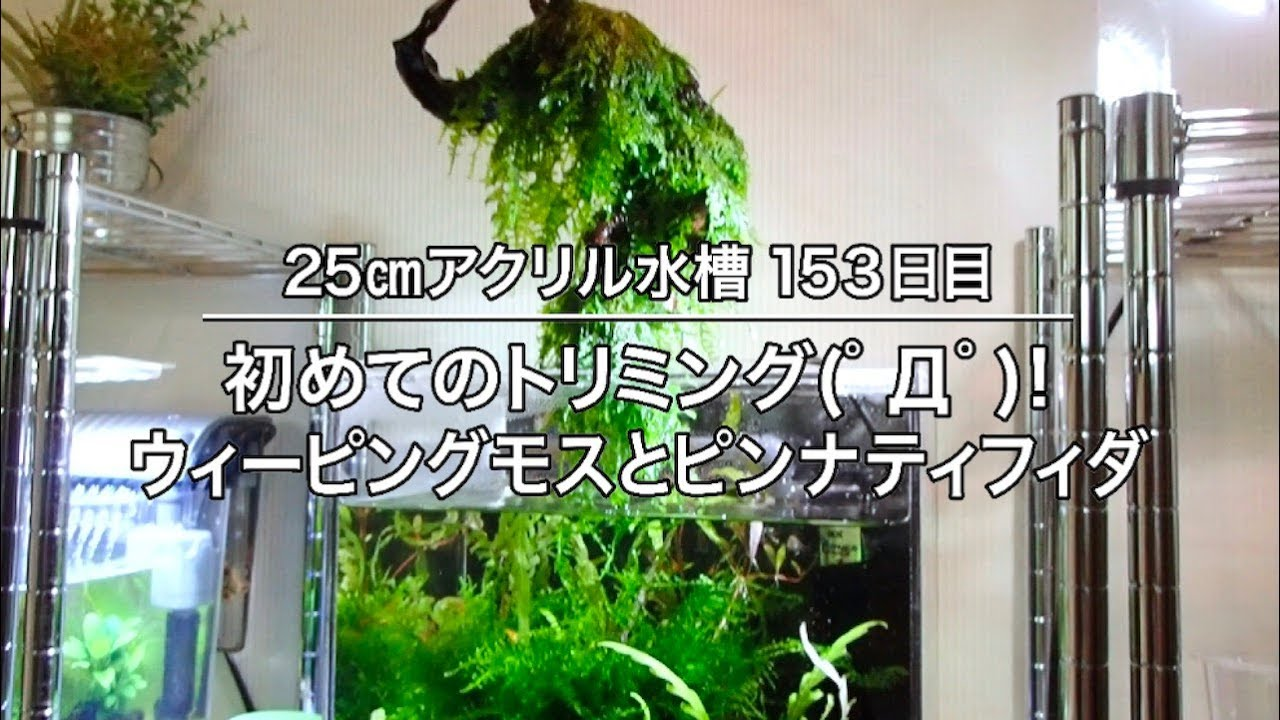最高 Ever 25cm 水槽 - カジノ