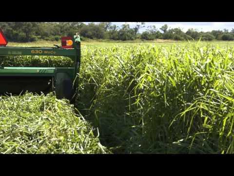 SIEMBRA Y COSECHA TV: Confección de rollos de pastura