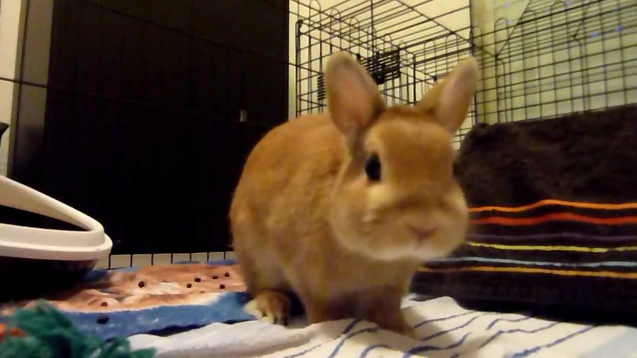 Petite video de ma coquine pour x hamster - 3 part 1