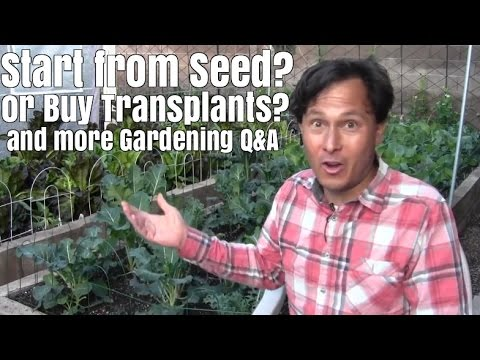 Start Your Garden from Seed or Buy Transplants? & More Garden Q&A