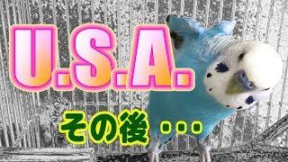 続・【インコが歌ってみた】DA PUMP / U.S.A. セキセイインコ・うめ