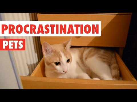 Procrastination Pets Video Compilation 2016