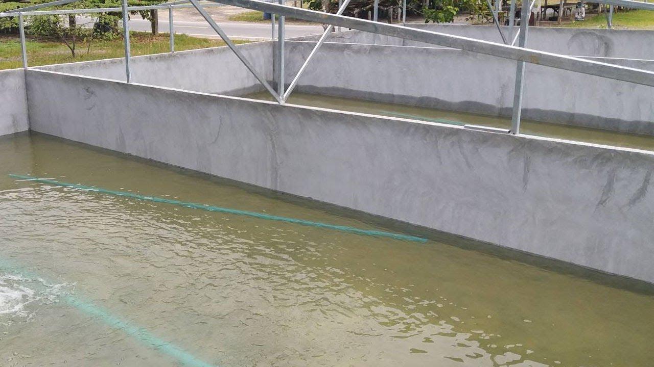 การสร้างบ่อซีเมนต์,บ่อปูนเลี้ยงปลา
