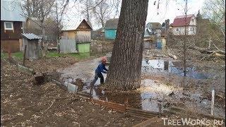 валка больших деревьев, подборка. Часть 2. Big tree felling compilation (Russia). Part 2