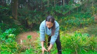 山里面摘回來的小黃薑 用中國貴州傳統的做法,这个冬天就吃它啦! In China, ginger cooking method | Chinese Food 野小妹Wild Girl