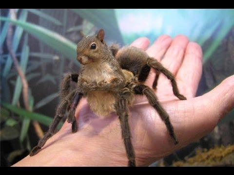 Spider-Squirrel Cropped | Oleg Tovologuine | Flickr