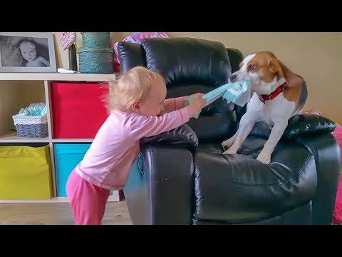 Cute dog loves baby from the first meeting | Charlie the dog and baby Laura