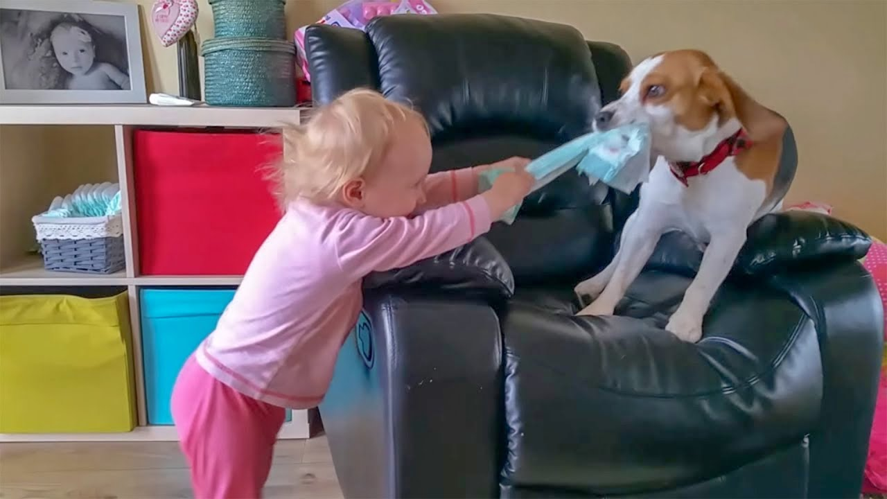 Cute Dog Loves Baby From The First Meeting Charlie The Dog And - 23 adorable photos proving babies need pets