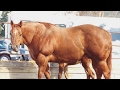 10 Horse Breeds You Won't Believe Actually Exist!!!