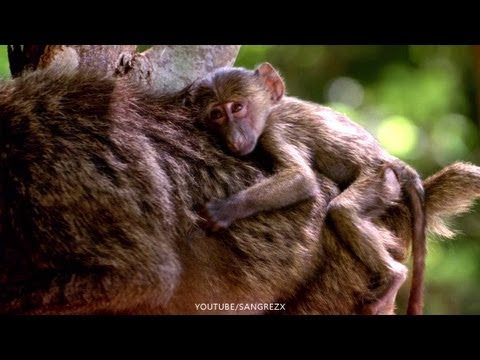 ANIMALES EN MOVIMIENTO