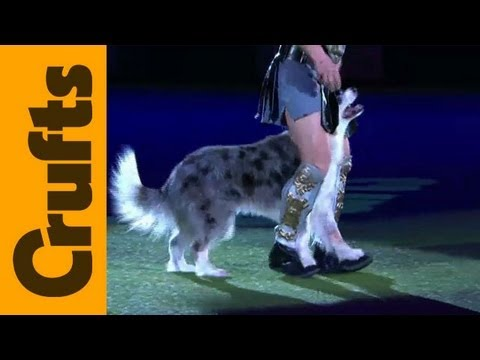 Heelwork to Music - Freestyle International - 1st Place - Crufts 2012