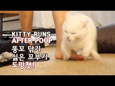 똥꼬 닦기 싫은 꼬부기 도망쳐! 똥꼬모험 CAT RUNS AWAY AFTER POOP