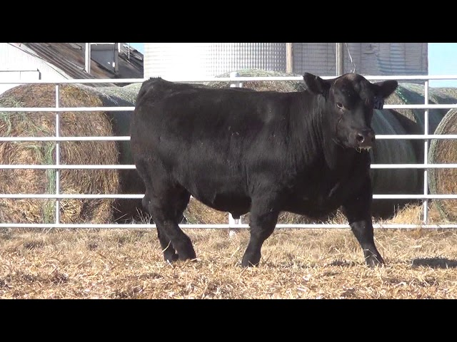 Express Ranches Lot 347