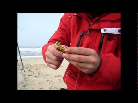 Baiting crab on a pennel rig.mp4