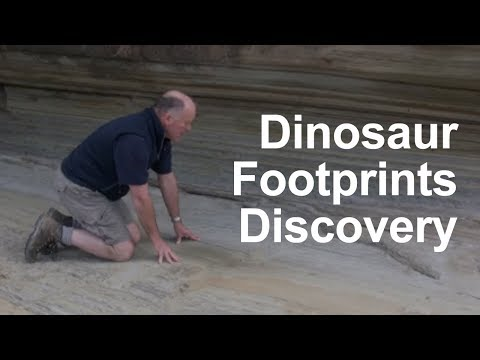 First dinosaur footprints discovered in New Zealand