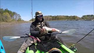 Instant video play shad run mar 23 2016 occoquan for Rudee inlet fishing