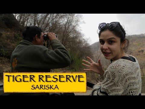 Sariska Tiger Reserve || Jaipur