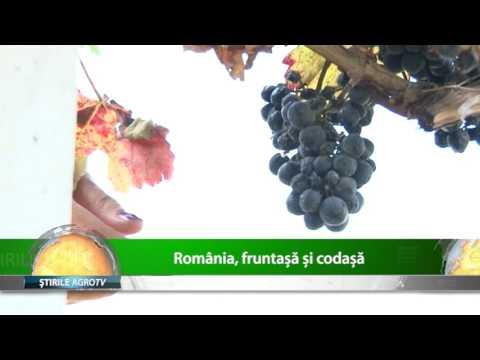 Cum sta Romania la cultura de vita de vie