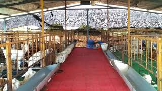 Goat plastic flooring sheets for  Tamil Nadu contact,9715031660