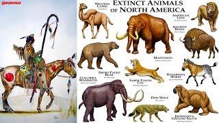 Pt. 9 - Untold Ancient American Truth / Origin of Animals / Mammals, Camels, Horses, Dogs