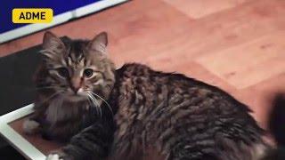 Игрушка для кота своими руками [Лучшие видео ADME]