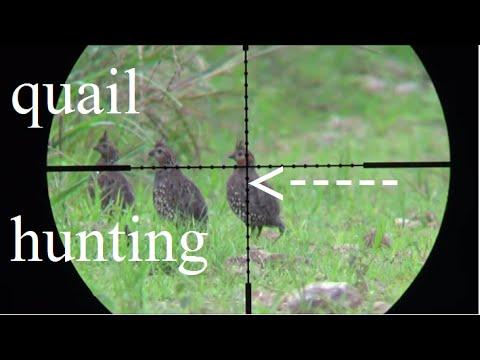 caza de perdises  con rifle de aire