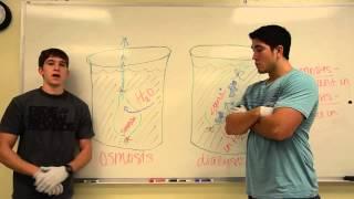Pre-Lab Osmosis & Dialysis