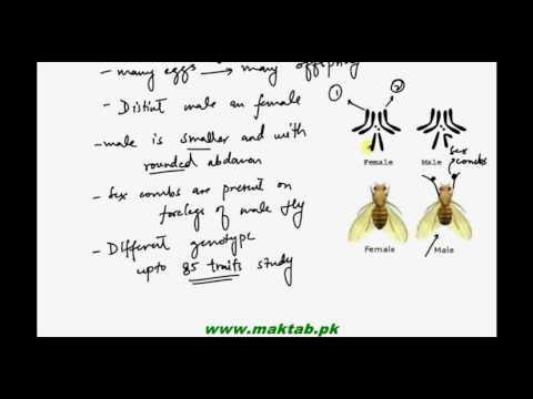FSc Biology Book2, CH 22, LEC 10: Sex linkage in Drosophila