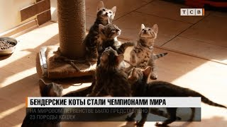 Бендерские коты стали Чемпионами мира