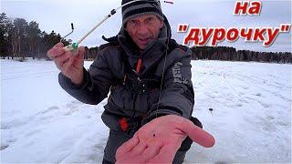 Рыбалка на ДУРОЧКУ Конец февраля 2021 Истра Трусово
