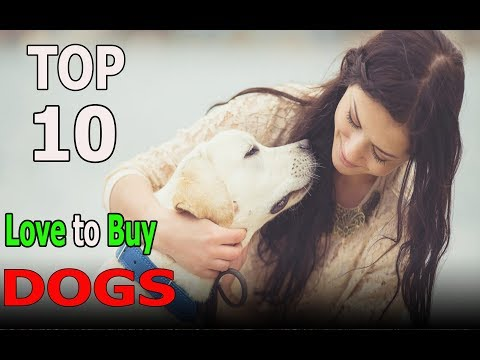 Top 10 Dog Breeds You love to Buy | Top 10 animals