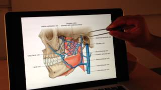 Vascular Anatomy (3 of 4): Venous Drainage -- Head and Neck Anatomy 101