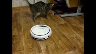 Охота робота-пылесоса на кота