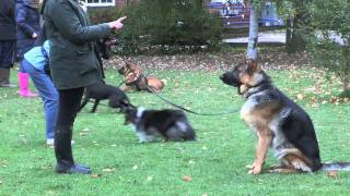 Dog Training With Jackie Murphy (dog Training Kent)