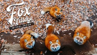 Fox Village in Japan: The Fluffiest Place on Earth! (Miyagi Zao, Shiroishi) キツネ村