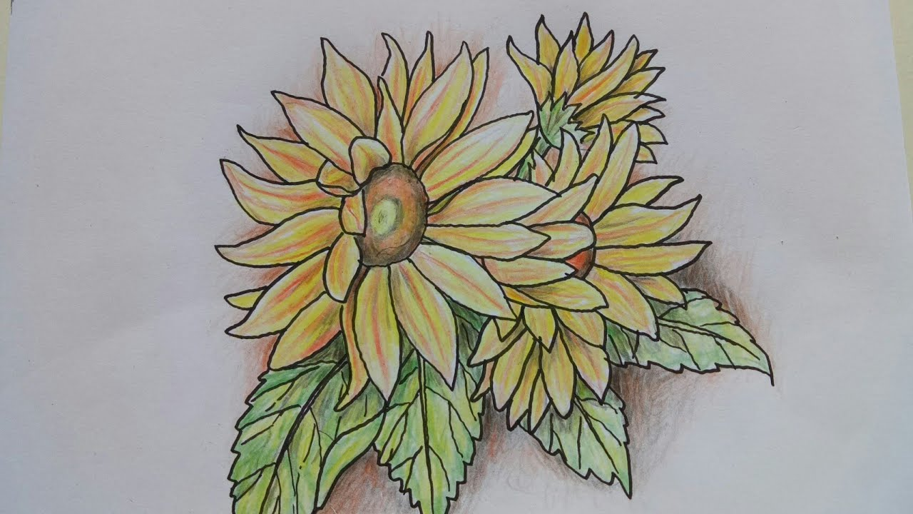 Cara Mudah Menggambar Bunga Matahari Dengan Pensil Warna Youtube