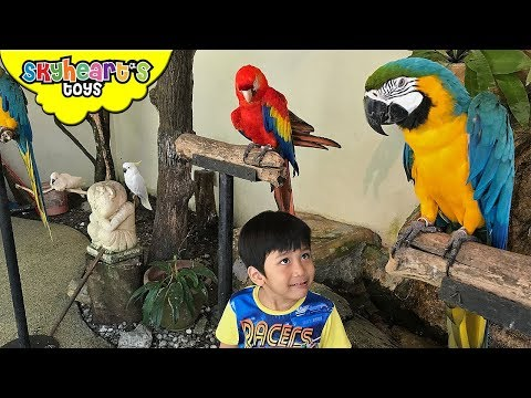 Toddler's Adventure in KUALA LUMPUR BIRD PARK | Flying Animals, Aviary Safari Zoo Birds Kids