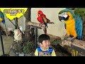 Toddler's Adventure in KUALA LUMPUR BIRD PARK | Flying Animals, Aviary Safari Zoo Birds Kids